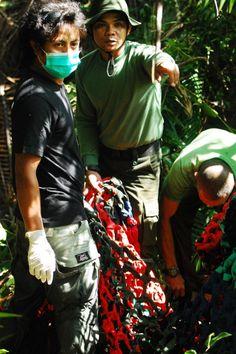 The International Animal Rescue team locates A-Ul, a rescued Bornean Orangutan.