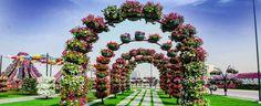 Un Rosedal del Parque Jardin