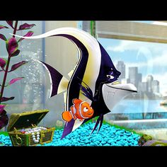 Finding Nemo the Play. Scene The Escape. In this scene Nemo escapes the office of the evil dentist, just in time before he is giving to the dentist's granddaughter. Nemo is on his way to his father! Disney Pixar, Walt Disney, Disney Animation, Disney Magic, Animation Films, Finding Nemo Fish, Finding Nemo 2003, Film Pixar, Disney Films