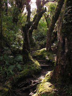 ~ Goblin Forest ~ In Egmont National Park, New Zealand, the forest on Mt Taranaki's middle slopes is known as 'Goblin Forest', because of the gnarled shape of the trees and the thick swathes of trailing moss.