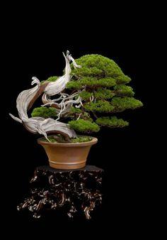 Home Garden Design, Home And Garden, Juniper Bonsai, Poisonous Plants, Unique Trees, Beautiful Landscapes, Beautiful Flowers, Herbalism, Succulents