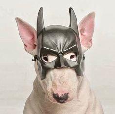 I'm The Batman!!