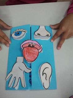 24 Five senses crafts for preschoolers - Preschool - Aluno On Five Senses Preschool, My Five Senses, Senses Activities, Body Preschool, Lap Books, Science For Kids, Science And Nature, Teaching Science, Science Projects