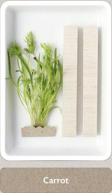 Herbs Micro Herbs, Spices And Herbs, Fresh Herbs, Homemade Seasonings, Herbal Medicine, Home Brewing, Dream Garden, Cupboard, Herbalism