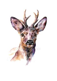 Roe deer a painting by artist jane davies LIMITED EDITION PRINTS are available on my website