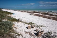 View of beach from site 68 Sandspur Campground - Bahia Honda SP FL
