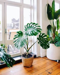 home decor plants 46 DIY Plant Stand ideas to Fill Your Living Room With Greenery These trendy Home Decor ideas would gain you amazing compliments. Check out our gallery for more ideas these are trendy this year. Indoor Green Plants, Outdoor Plants, House Plants Decor, Plant Decor, Monstera Deliciosa, Trendy Home Decor, Diy Plant Stand, Décor Boho, Plant Design