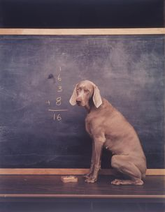 As a teacher, I adore this photo!  William Wegman