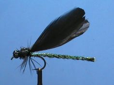 Ebony Jewelwing - Damselflies are a source of food to trout on streams as well as all fish in lakes. They come in many different colors, this is just one. - fly fishing video channel