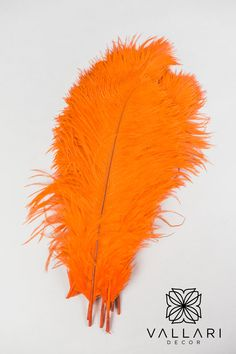 "These orange ostrich feathers are wide and fluffy, they make a great addition to craft pieces. They are measured from quill to tip. The 14-16"" size is also the best for those looking to make feather centrepieces (in a 24"" vase). I would recommend 15-25 feathers per centrepiece. Anything less then that makes it a bit bare -- This depends on how tall the vase is as well. ✨Follow us on social media!✨ 👉Instagram - @VallariDecor 👉Pinterest - @VallariDecor 👉Facebook - @VallariDecor Cylinder Vase Centerpieces, Feather Centerpieces, Diy Centerpieces, Centrepieces, Ostrich Feathers, Chakras, Quilling, Social Media, Events"