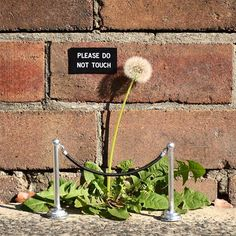"""Please Do Not Touch"" the work of Michael Person in Sydney, Australia  from Mike Rigby (@wehelp_you_grow) 