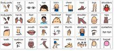body parts flashcards - Buscar con Google