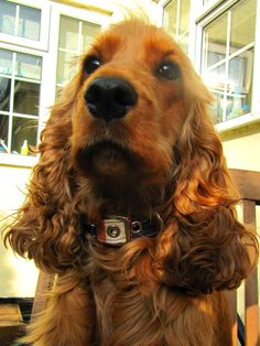 A Spaniels Tail Creature Clothes fabric collar review