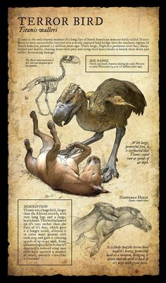 Dodo:Design and Illustration for extinct, prehistoric animal specimens and fossils, natural history museum signage. Prehistoric Creatures, Mythological Creatures, Fantasy Creatures, Mythical Creatures, Prehistoric Age, Dinosaur Fossils, Dinosaur Art, Dinosaur Crafts, Vida Animal