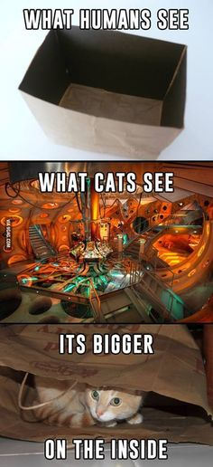 Doctor who cat                                                                                                                                                                                 More