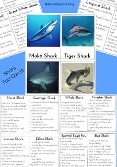 Shark Facts, Shark information for kids, Sharks, Shark Week, Great for a themed unit study, Montessori Printables, Shark games and activities for kids.
