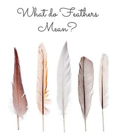 Finding a feather can be an uplifting, spiritual experience, especially when you find one in an unexpected place such as in your house or in your purse, where there isn't an easy way to explain its presence. Grey Feather Meaning, Feather Tattoo Meaning, Feather Symbolism, Feather Tattoos, Tattoos With Meaning, Meaning Of Feathers, Dandelion Tattoos, Bird Tattoos, Feather Quotes