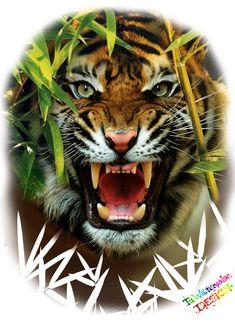 Tiger Tattoo Design, Cat Tattoo Designs, Leo Lion Tattoos, Leg Tattoos, Pine Tattoo, Tiger Tattoo Sleeve, Tiger Sketch, Save The Tiger, Tiger Wallpaper