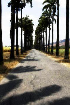 Camino que conduce a la Hacienda de Ron Santa Teresa, Aragua, Venezuela