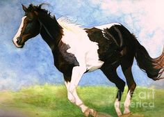 Janine Riley Painted Horse Watercolor Painting   A Paint horse galloping through the pastures.