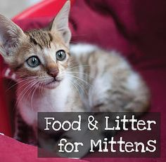Donate to help take care of our furry lil friends.