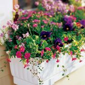 I am totally buying this self watering windowbox for next season! I can finally have real flowers again:)