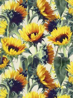 Sunflowers Forever Art Print by Micklyn | Society6