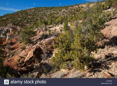 Grand Canyon, Stock Photos, Water, Campaign, Travel, Outdoor, Gripe Water, Outdoors, Viajes