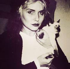 [Debbie Harry y gato Siamés] » シャム猫 - [*- Deborah Ann Harry, conocida como Debbie Harry, cantante y actriz estadounidense, es la vocalista de la popular banda Blondie. (Wikipedia). Fecha de nacimiento: 1 de julio de 1945 (edad 71), Estados Unidos.]