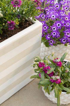 The Mini Rainbow Garden of Your Dreams - Oh Joy! Deck Planter Boxes, Planter Pots, Garden Stakes, Garden Soil, Flamingo Garden, Rainbow Garden, Garden Tool Set, Star Of Bethlehem, Gardening Gloves