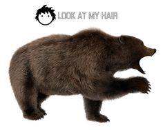 dynamic hair for daz studio Black Bear, Brown Bear, My Hair, Poster, Animals, Image, Animales, American Black Bear, Animaux