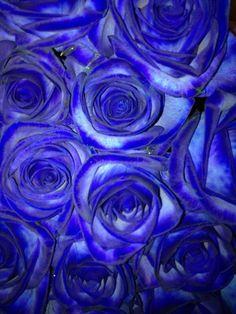 Blue! #blue #flowers #roses #colour
