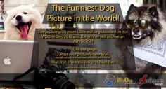 WorlDog lauched a Funny Contest! Share a picture of your best friend in a funny situation and show him or her to the World! Funny Dog Pictures, Pictures Of You, A Funny, Funny Dogs, Your Best Friend, Best Friends, Hello Everyone, News, World