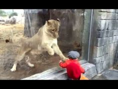 WILD ANIMALS Trying To Attack Kids Through Glass At ZOO Compilation 2017