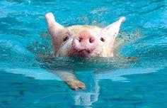 Keenan loves pigs!!!