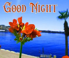 Good Night Images with flowers and nature - PIX Trends Sweet Good Night Images, Sweet Dreams Images, Good Night To You, Photos Of Good Night, Romantic Good Night, Good Night Sweet Dreams, Happy Akshaya Tritiya Images, Happy Karwa Chauth Images, Good Night Flowers