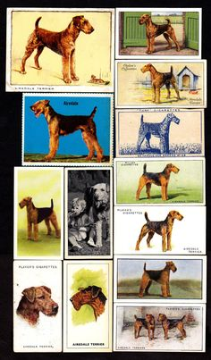 Airedale stamps.