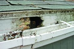 4 Fascia Board Repair Tips for Your Roof Roofing experts say to repair fascia damage before replacin Home Renovation, Home Remodeling, Bathroom Remodeling, Fascia Board, Pergola, Wood Repair, Siding Repair, Garage Roof, Home Fix