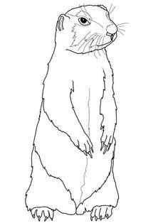 anteater coloring page Anteater Coloring Pages Printable