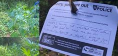 UK Police Leave Polite Note for Illegal Pot Growers