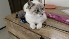 Milquetoast - Stacy Plays Cat