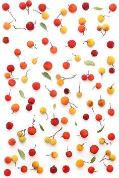strawberry tree | STILL (mary jo hoffman)