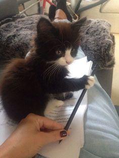 Chaton ne veut pas que tu étudies