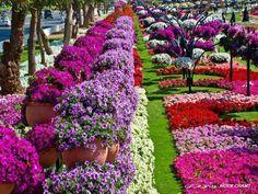 Al Ain Paradise gardens, UAE