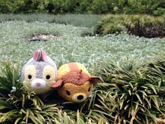 Zoom Around the Park with Tsum Tsum | Oh My Disney