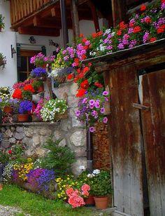 Angolo fiorito a Penia, Canazei, Trentino Alto Adige. Ph.Antonella Giubbini