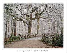Winter Softness: Once Upon a Time - Deep in the Forest Snowy Forest, Bible Verse Wallpaper, Heart Tree, World View, Winter Trees, How Beautiful, Once Upon A Time, Pretty Pictures, Scenery