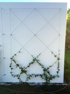 Use eye bolts and wire to create a wall mounted trellis for your climbing plants. Use eye bolts and wire to create a wall mounted trellis for your climbing plants. Adds ambiance and Vegetable Garden Design, Diy Garden, Small Garden Design, Garden Trellis, Garden Care, Balcony Garden, Garden Projects, Wire Trellis, How To Landscape Small Garden