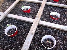 "cutworm collars - ""Red Solo cup""! Landscape Design, Garden Design, Red Solo Cup, 33rd Birthday, Garden Inspiration, Garden Ideas, Drupal, Amazing Flowers, Beautiful Gardens"