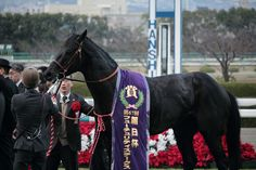 Leontes - The Asahi Hai Futurity Stakes - Hanshin Racecourse Thoroughbred Horse, Horse Racing, New Art, Horses, Animals, Animales, Animaux, Horse, Animal
